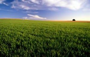 crop management green-field-farming