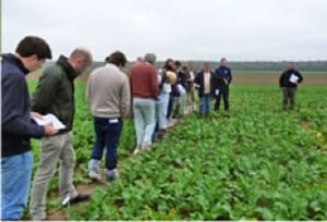 Crop Management Partners Companion Cropping
