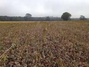 Crop drilled into a cover